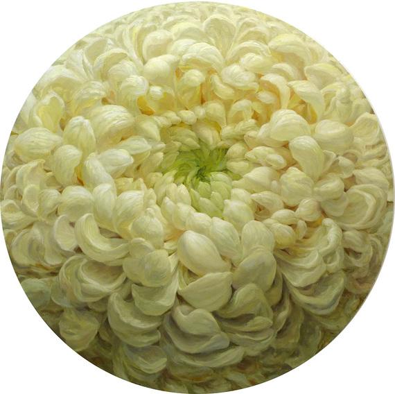 2014-12-21-Schoening_Chrysanthemum_2014_small.jpg