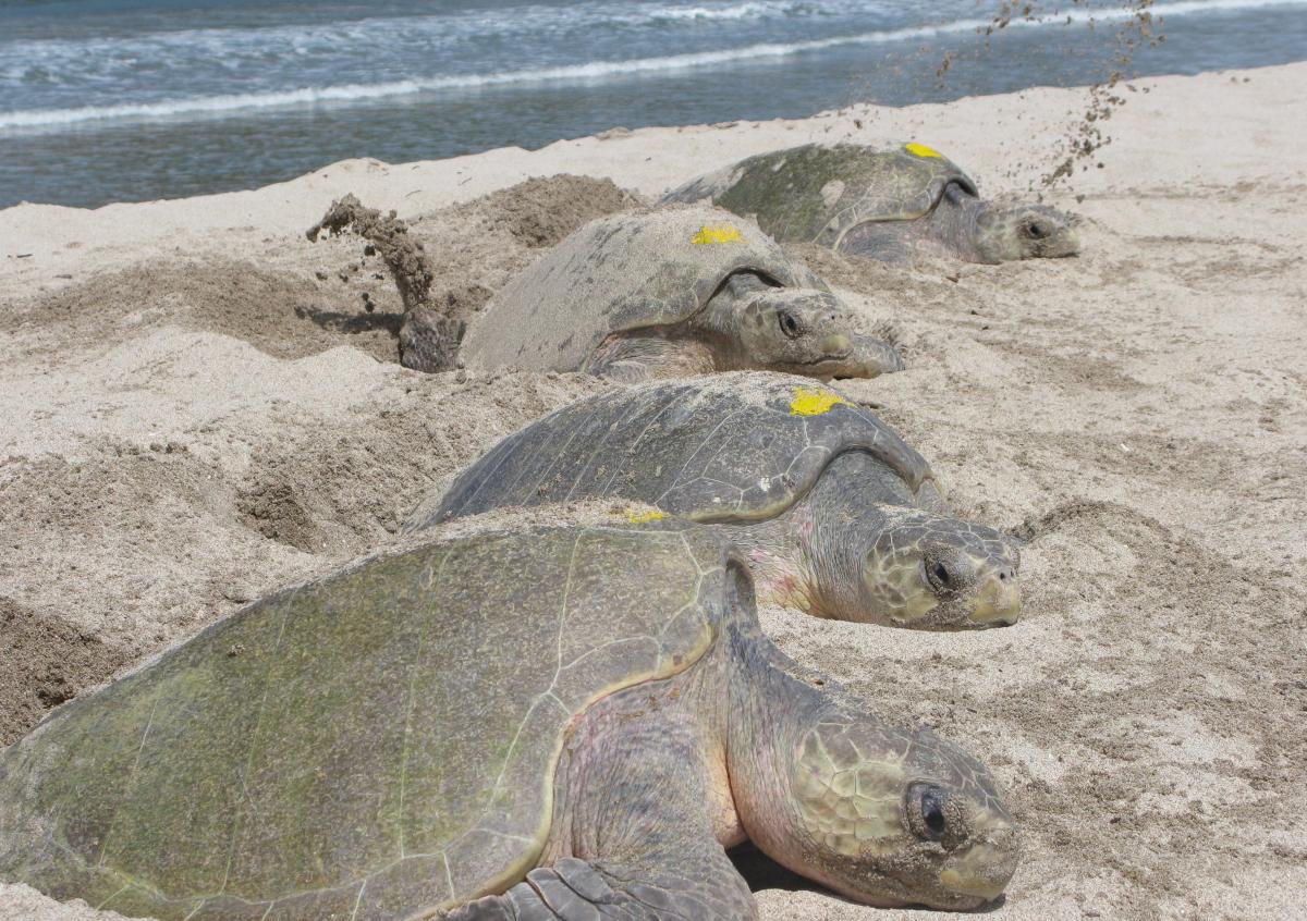 "<a href=""http://www.seethewild.org/541/35/nicaragua-cloud-forests-reefs-turtles-ometepe.html"" target=""_hplink"">La Flor Wildli"