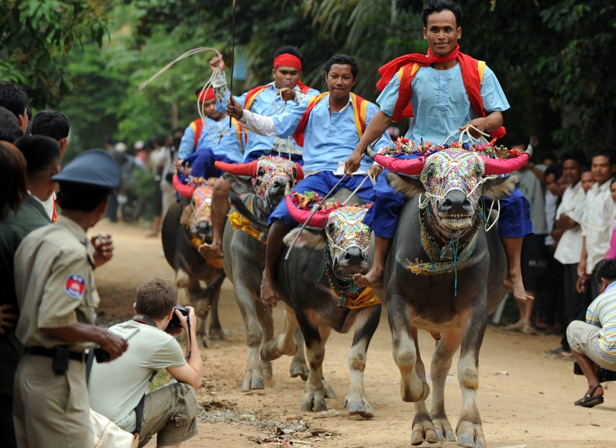 Cambodian villagers ride buffalos during the Pchum Ben festival, the festival of death, at Vihear Suor village in Kandal prov