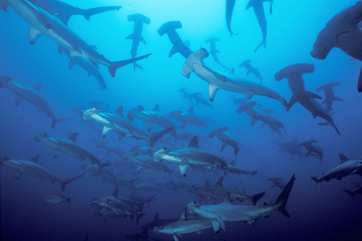 In 2007, scientists found that captive female hammerhead sharks could reproduce without having sex (I wouldn't be brave enoug