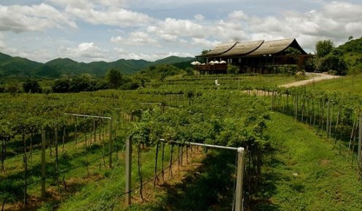 Traditionally, Thai wines haven't caused much fuss among wine enthusiasts. But over the past few years Thai winemakers have b