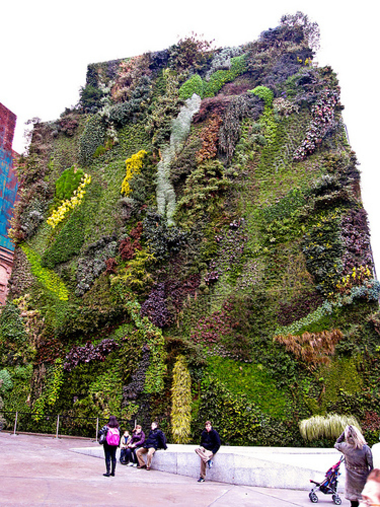 A lush living wall on a building oversees a public space. 