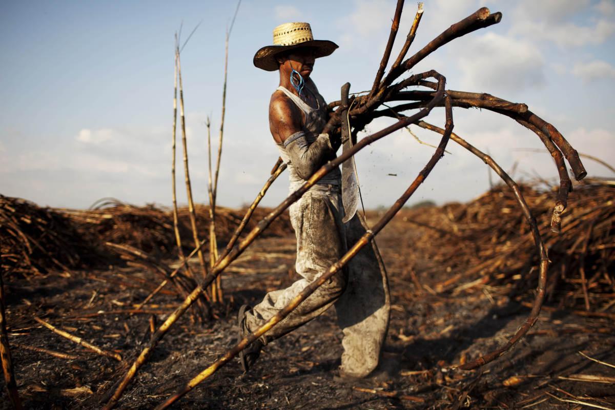 Field worker Jose Contreras, 31, carries sugar cane stalks on a field near Retalhuleu, Guatemala on Friday Nov. 25, 2011, (Ro