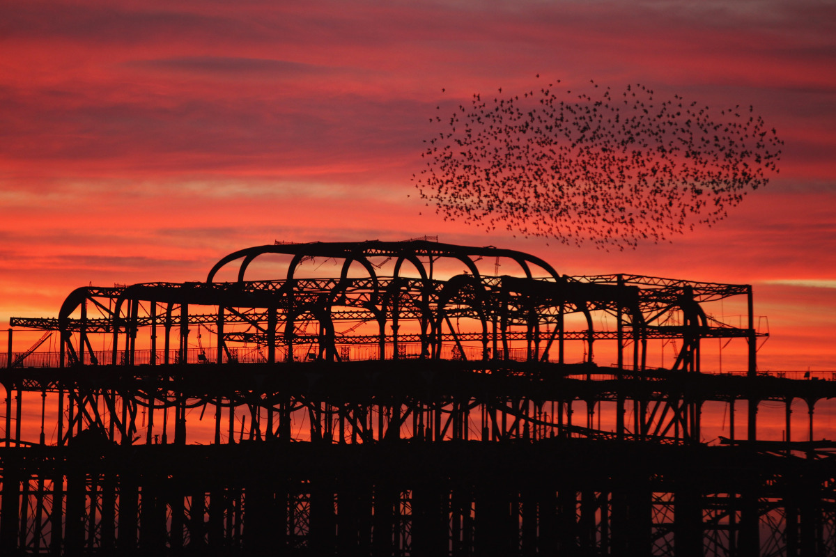 BRIGHTON, ENGLAND - DECEMBER 21: Starlings come home to roost on Brighton's Old Pier as the sun sets on December 21, 2011 in