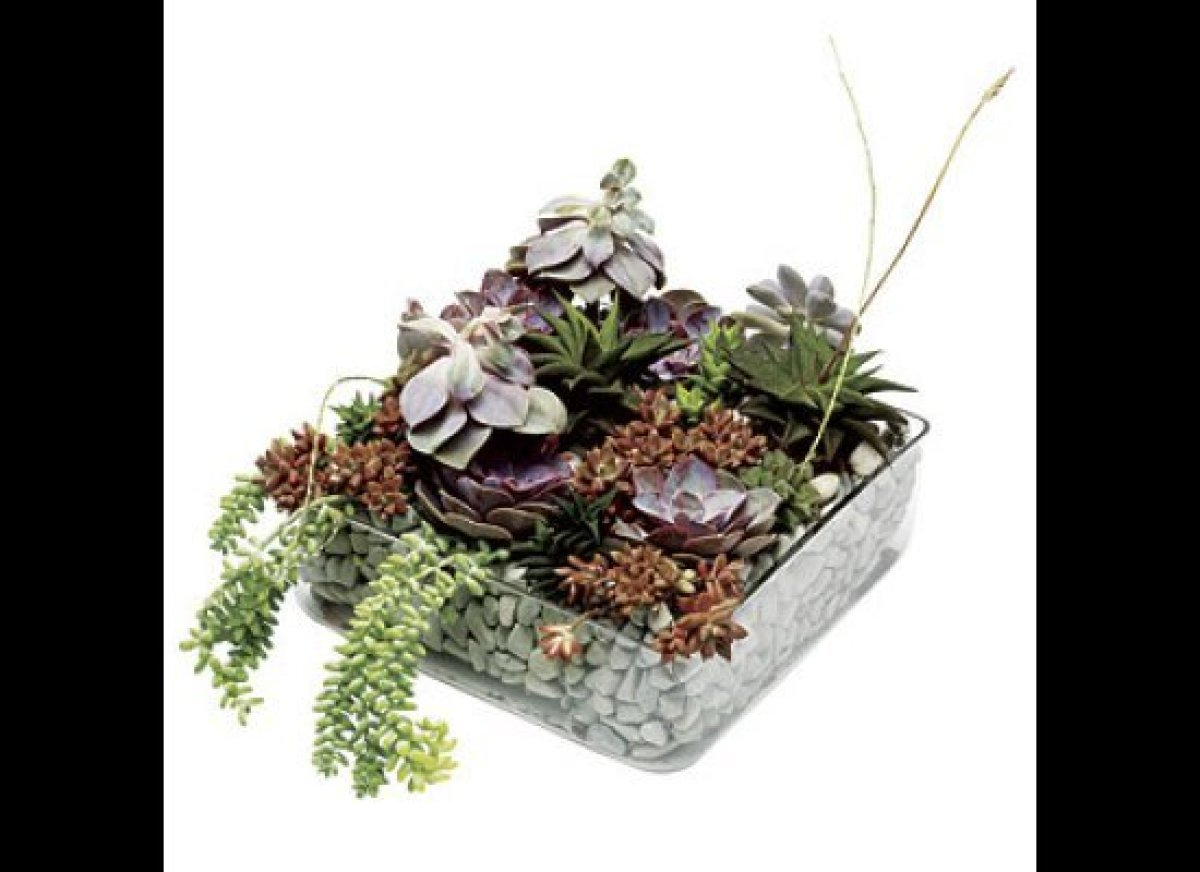 A bed of stones evokes a tranquil, Zenlike feeling. Centerpiece of echeveria, aloe aristata and burro's tail, $550, by Michel