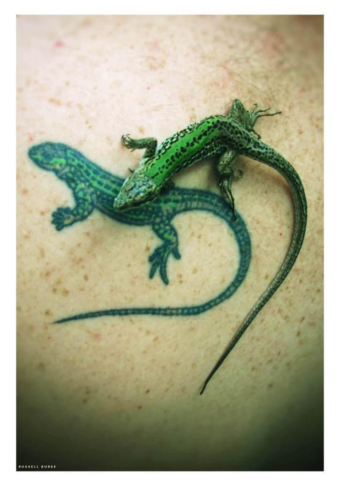 Russelll Burke, a biologist at Hofstra University, has a tattoo of a species of lizard he studies.