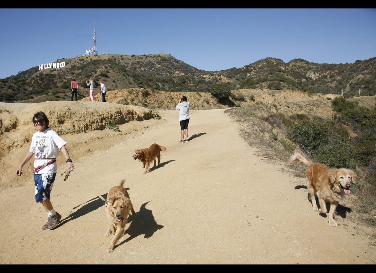 A hiker walks her dogs in Griffith Park near the Hollywood sign after a plastic bag containing a human head was discovered Tu