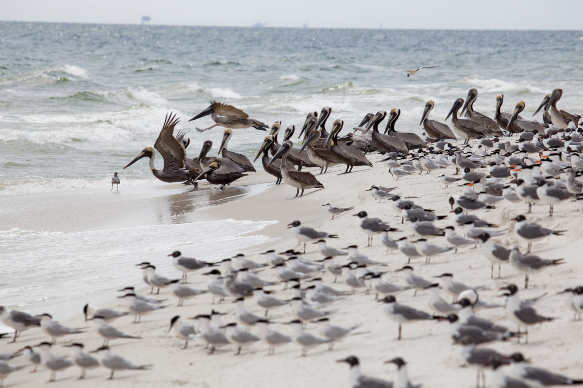 Alabama's coast is on SELC's endangered list for the second year in a row because a disaster on the scale of the <em>Deepwate