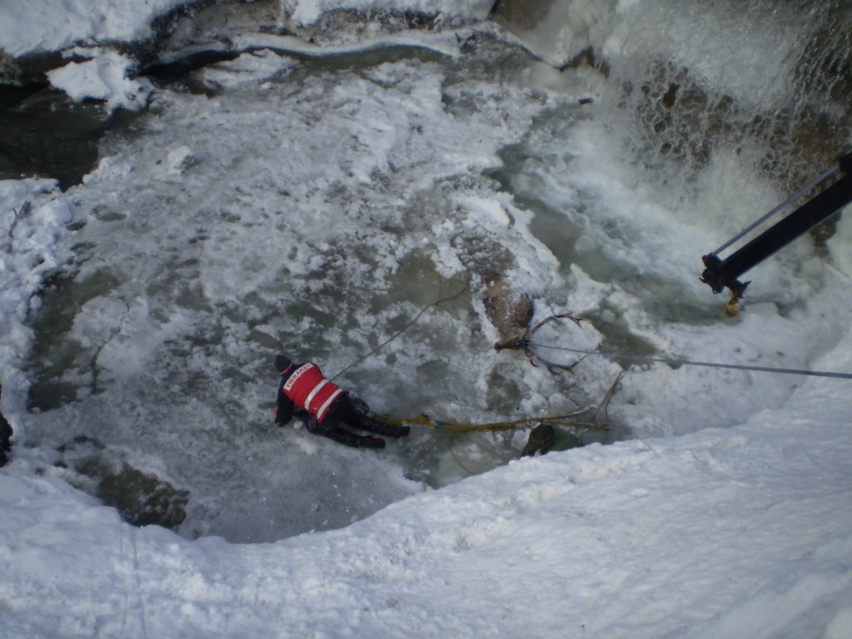 A rescue worker lies on the ice to help a stag stuck in icy waters in the Austrian Alps. Credit: Europics