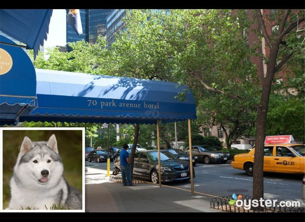 """<strong>THE DOG</strong>: Siberian Husky  <strong>THE HOTEL</strong>: <a href=""""http://www.oyster.com/new-york-city/hotels/7"""