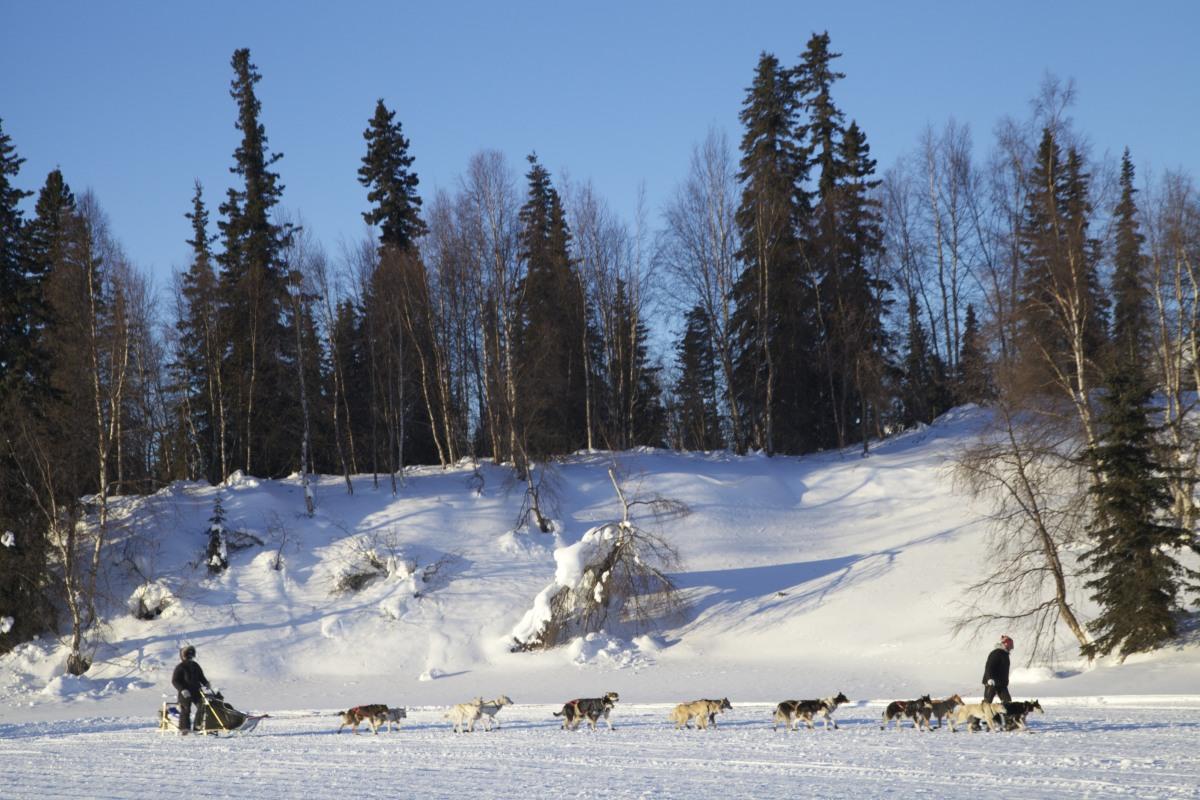 Fourteen dogs make a powerful team.  <em>Photo: Tyrone Potgieter</em>
