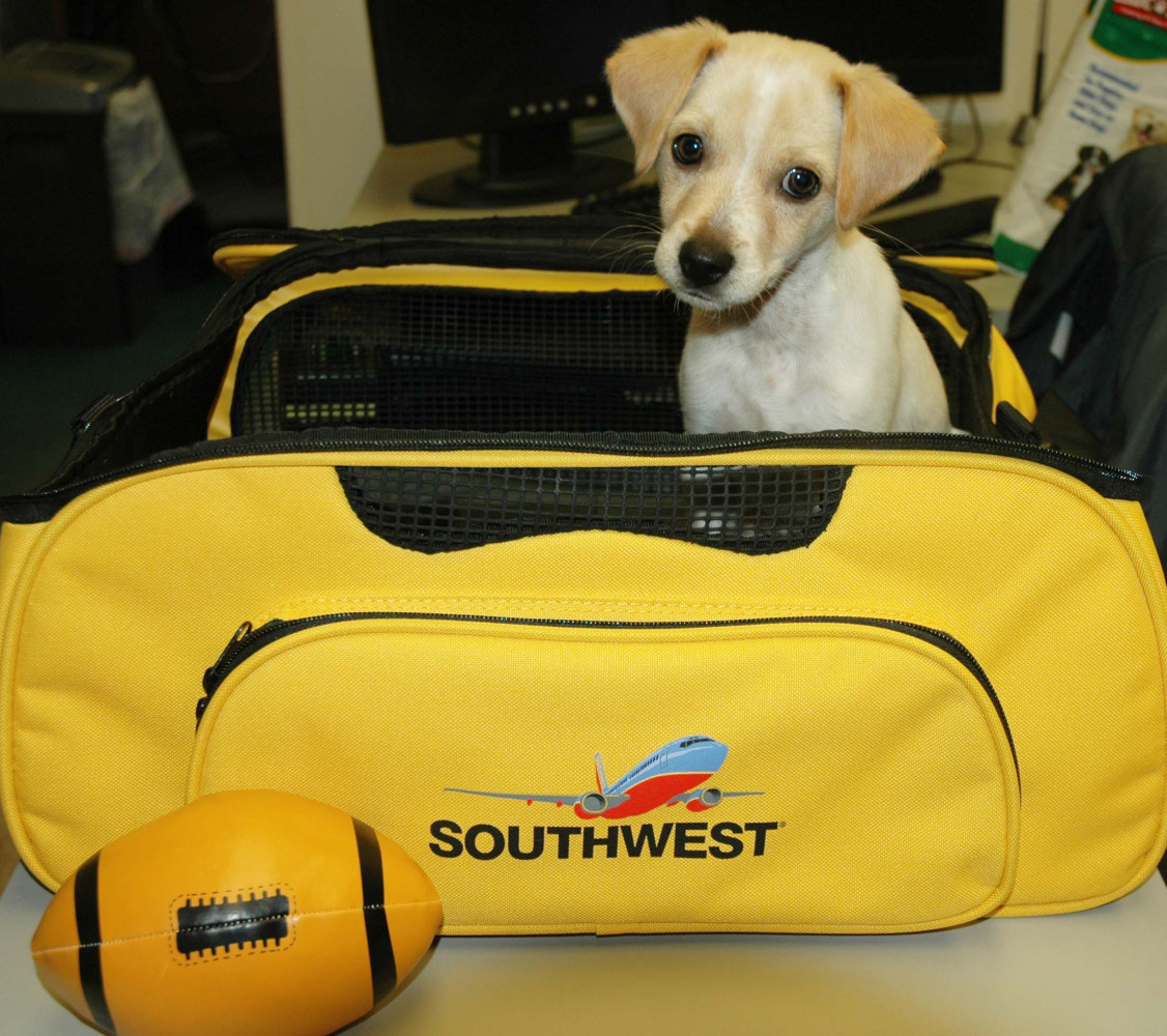 Fumble in his SWA travel bag.