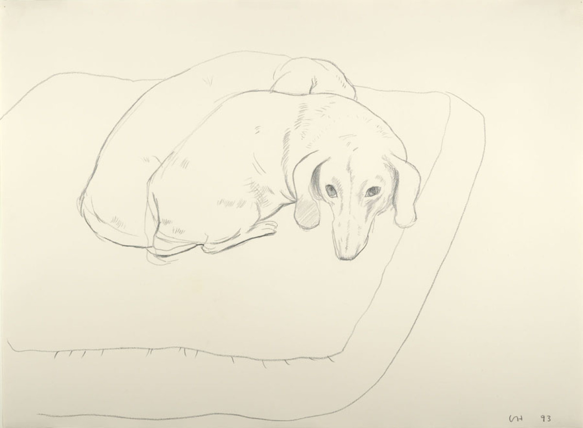 David Hockney (1937- ) Boodgie and Stanley, 1993 Crayon on paper 22 ½ x 30 ¼ in. The Morgan Library & Museum, New York T