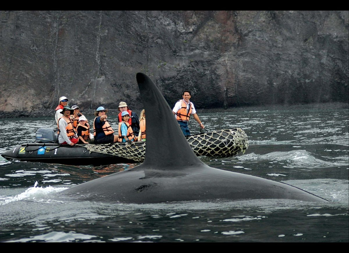 """A killer whale surfaces next to guests aboard a <a href=""""http://www.expeditions.com/gala360/index.aspx"""" target=""""_hplink"""">Lind"""
