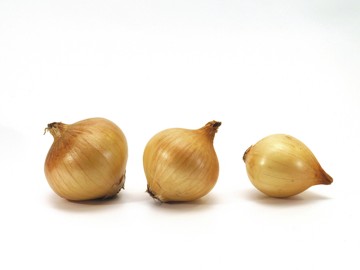The most common onion, and the real all-purpose work horse of the kitchen, is the yellow onion. When a recipe calls for onion