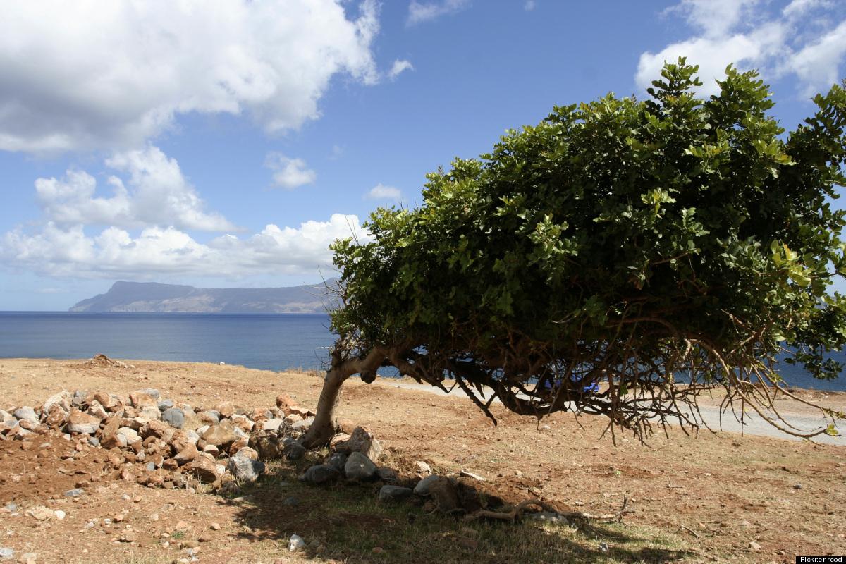 A windblown tree seats beachside on Crete.