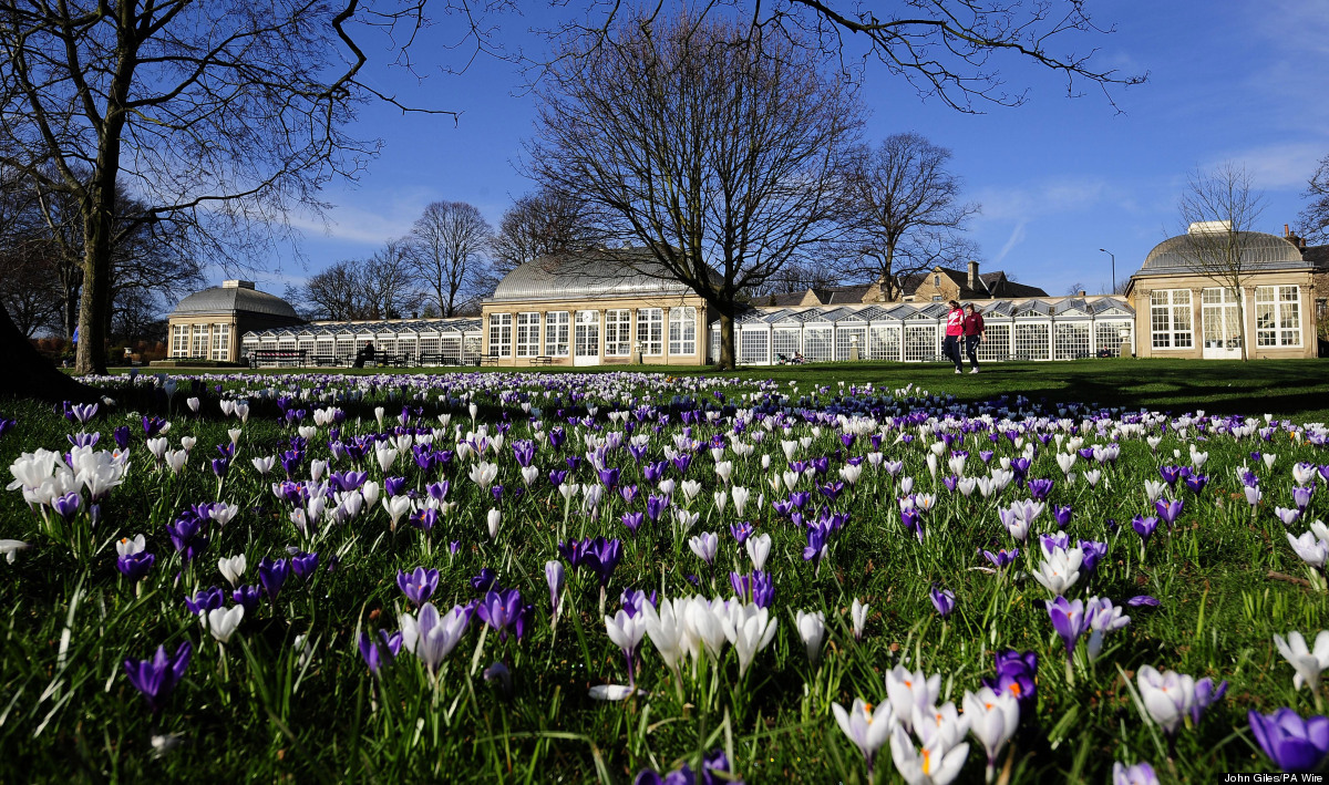 Vibrant spring colours among this carpet of crocuses in Sheffield Botanical Gardens today as the early spring weather continu