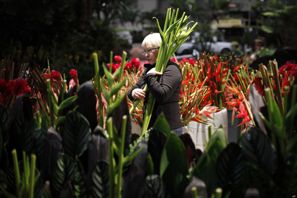 In this Thursday, March 1, 2012, Rita Stanton with Robertson's Flowers gathers flowers for an exhibit in the 2012 Philadelphi