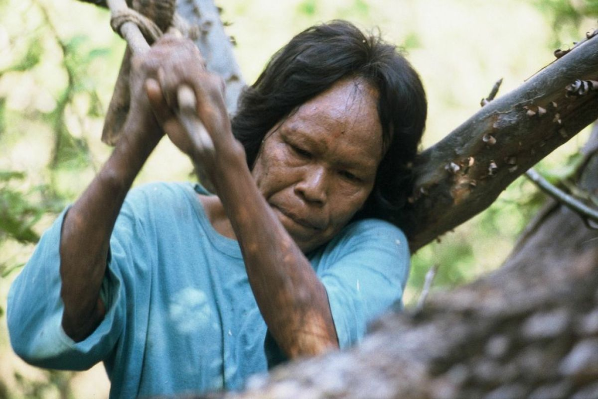 """Ibore, a Totobieogosode woman, using a traditional axe to open a beehive for honey, Paraguay. <a href=""""http://www.survivalint"""