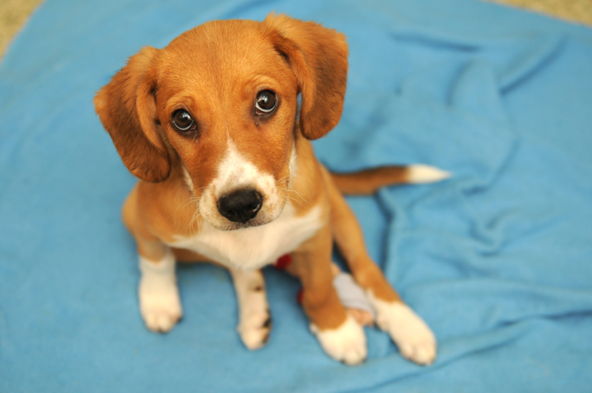 Meet Gabba, an adorable 3-month-old hound mix puppy...need we say more?  If you do need to hear more, get in touch with the