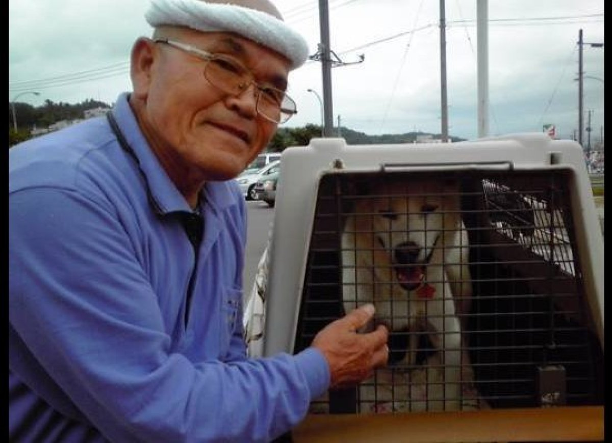 "Go-Go was returned to his owner in Fukushima, after being housed at Animal Rescue Kansai. (Photo courtesy of <a href=""http://"
