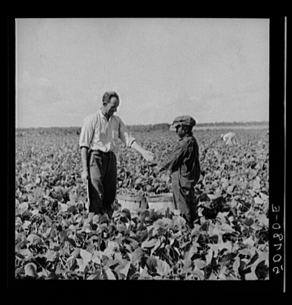 Nine year old Negro boy receiving twenty-cents for hamper of beans he picked for contract farmer. Homestead, Florida -- Libra