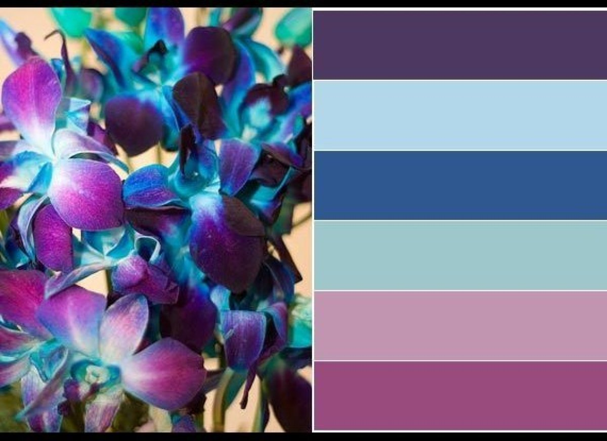 Paint Colors, From Top: Pure Purple, By U003ca Hrefu003d
