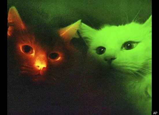 In 2007, South Korean scientists altered a cat's DNA to make it glow in the dark and then took that DNA and cloned other cats