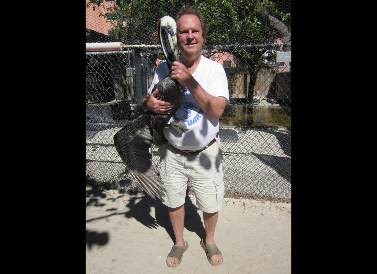 Ralph Heath, director of the Suncoast Seabird Sanctuary in Indian Shores, Florida, and pelican friend.