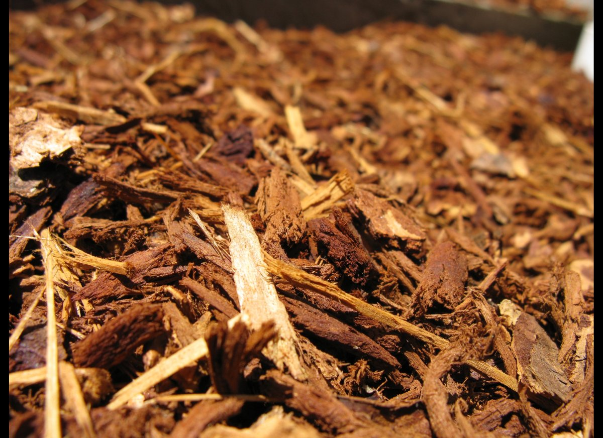"""Rake fallen leaves, twigs and old mulch, then bypass the compost bin and simply toss it. """"That's where insects lay their eggs"""