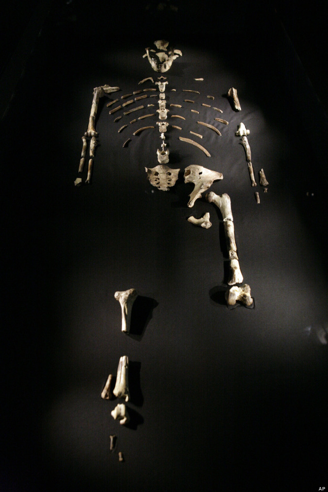 This Aug. 28, 2007 file photo shows the 3.2 million year old Australopithecus afarensis skeleton called Lucy, part of a new e