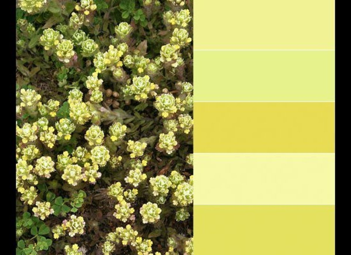 """Paint colors, from top: Lemon Freeze, 2025-50, by <a href=""""http://www.benjaminmoore.com/en-us/paint-color/lemonfreeze"""" target"""