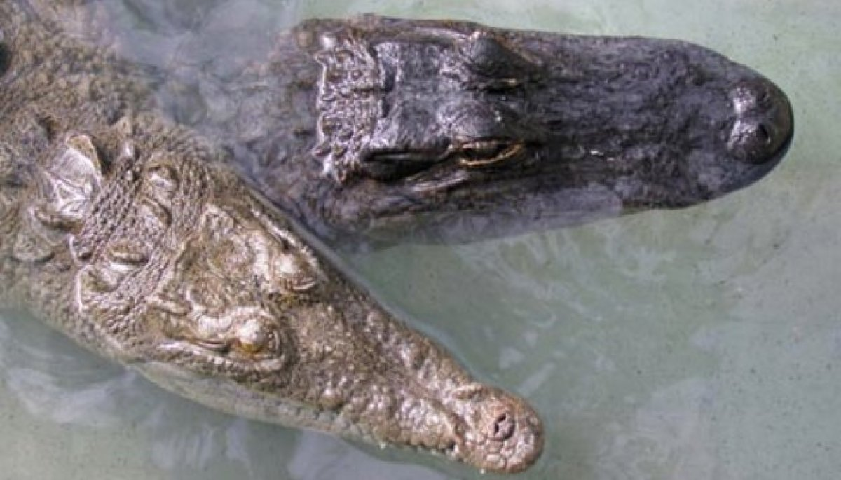 How to tell the difference: 