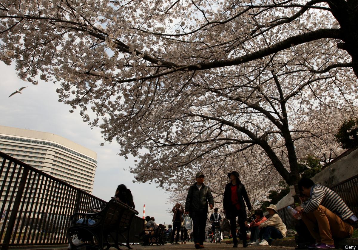 People walk under blooming cherry blossoms at Osakajokoen on April 9, 2012 in Osaka, Japan. (Buddhika Weerasinghe/Getty Image
