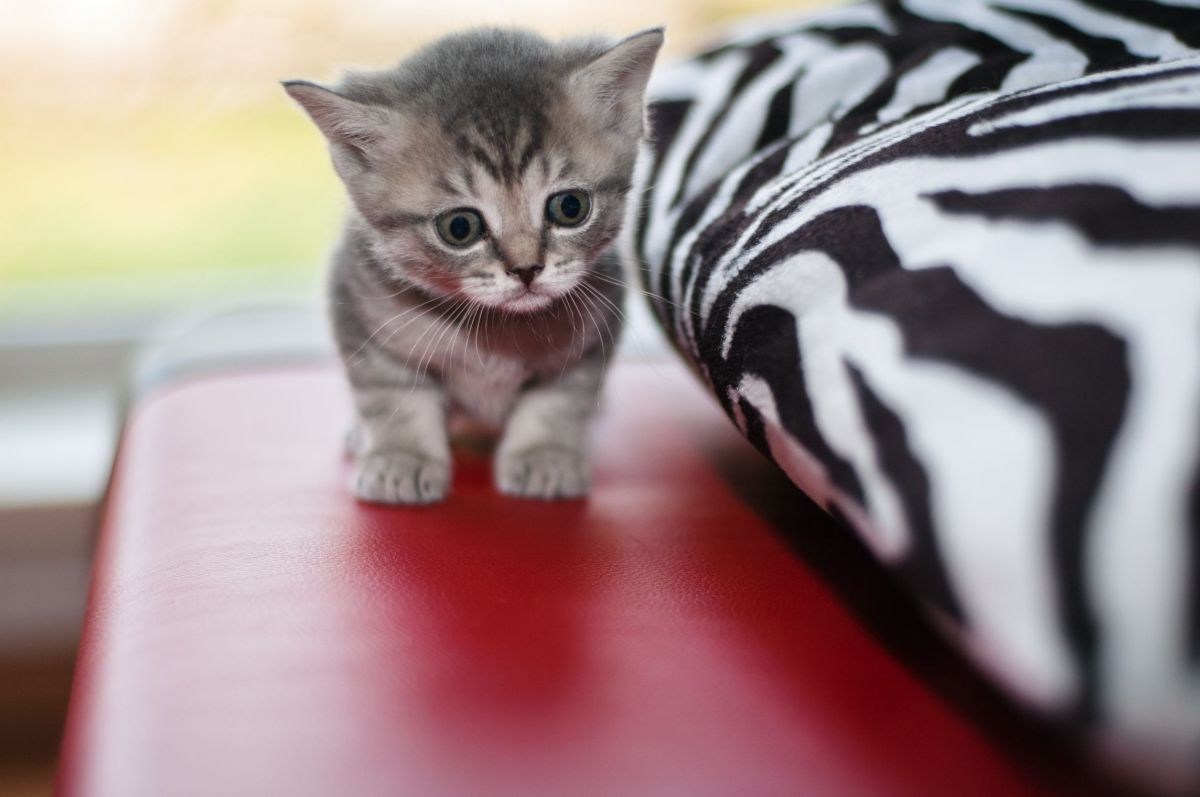 Everyone loves kittens, but these little fur balls aren't just fun and fluff. Up to 80 percent of all cats are infected with