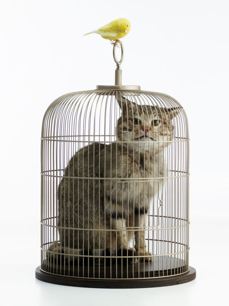 Eva and Franco Mattes aka 0100101110101101.ORG, Catt, 2010, Taxidermy cat and bird, polyurethane resin, cage, wood