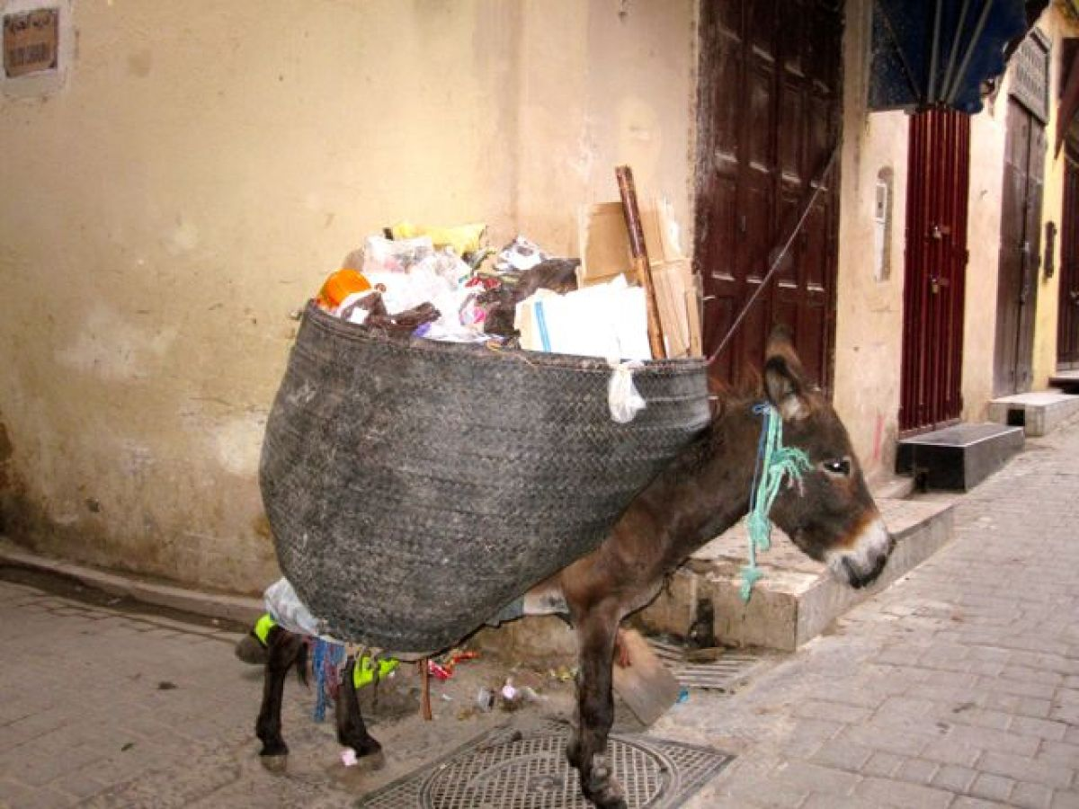 Trash is gathered and loaded into the saddle bags on either side of donkeys.  <em>Photo: Charlotte Temple</em>