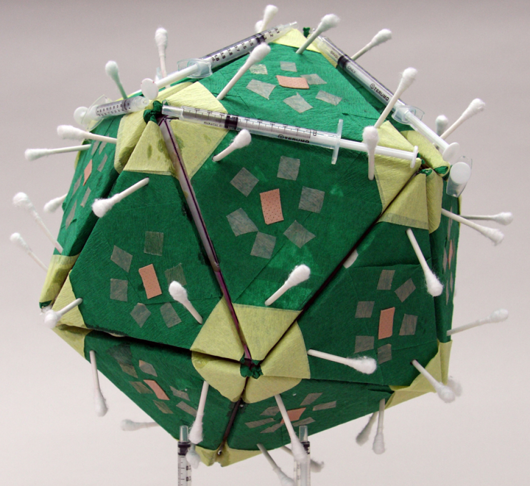 Angela Cesena, Model of Papillomavirus, 2011. 