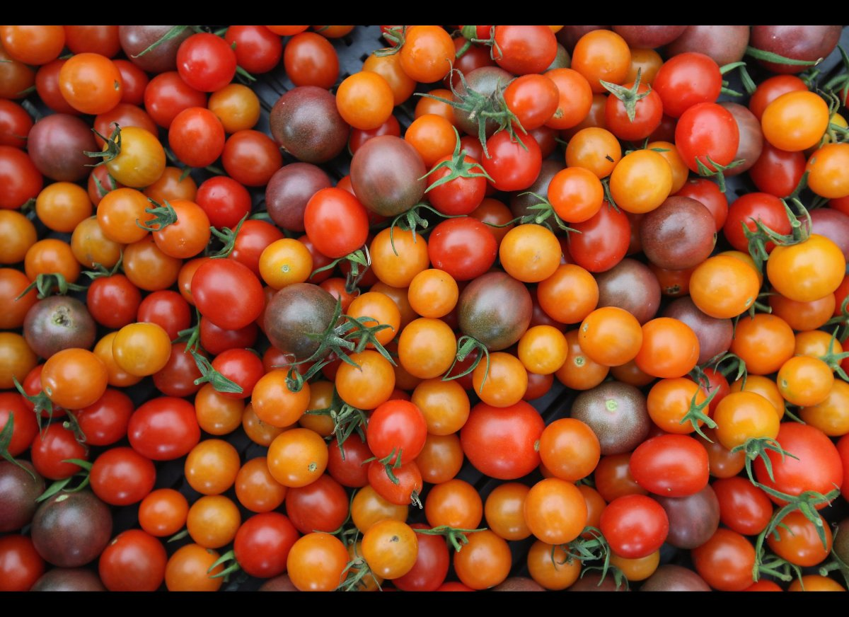 When it comes to tomatoes, you've got thousands of choices of varieties. Heirlooms, hybrids, determinate, indeterminate, some