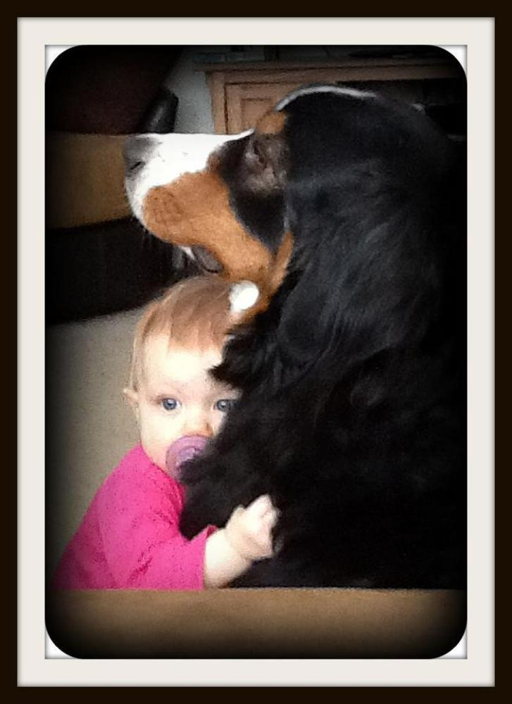 """[My dog taught my baby] How to love."" -- Sarah W.