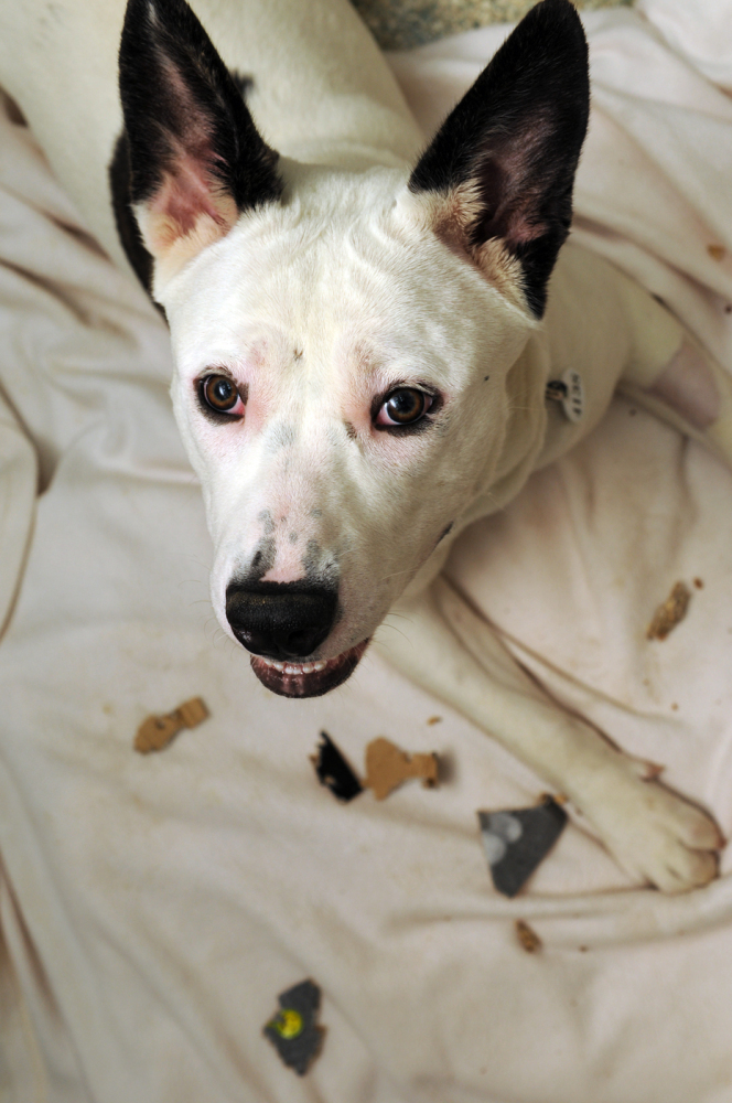 Pajamas is a stunning girl who has brains as well as beauty. 