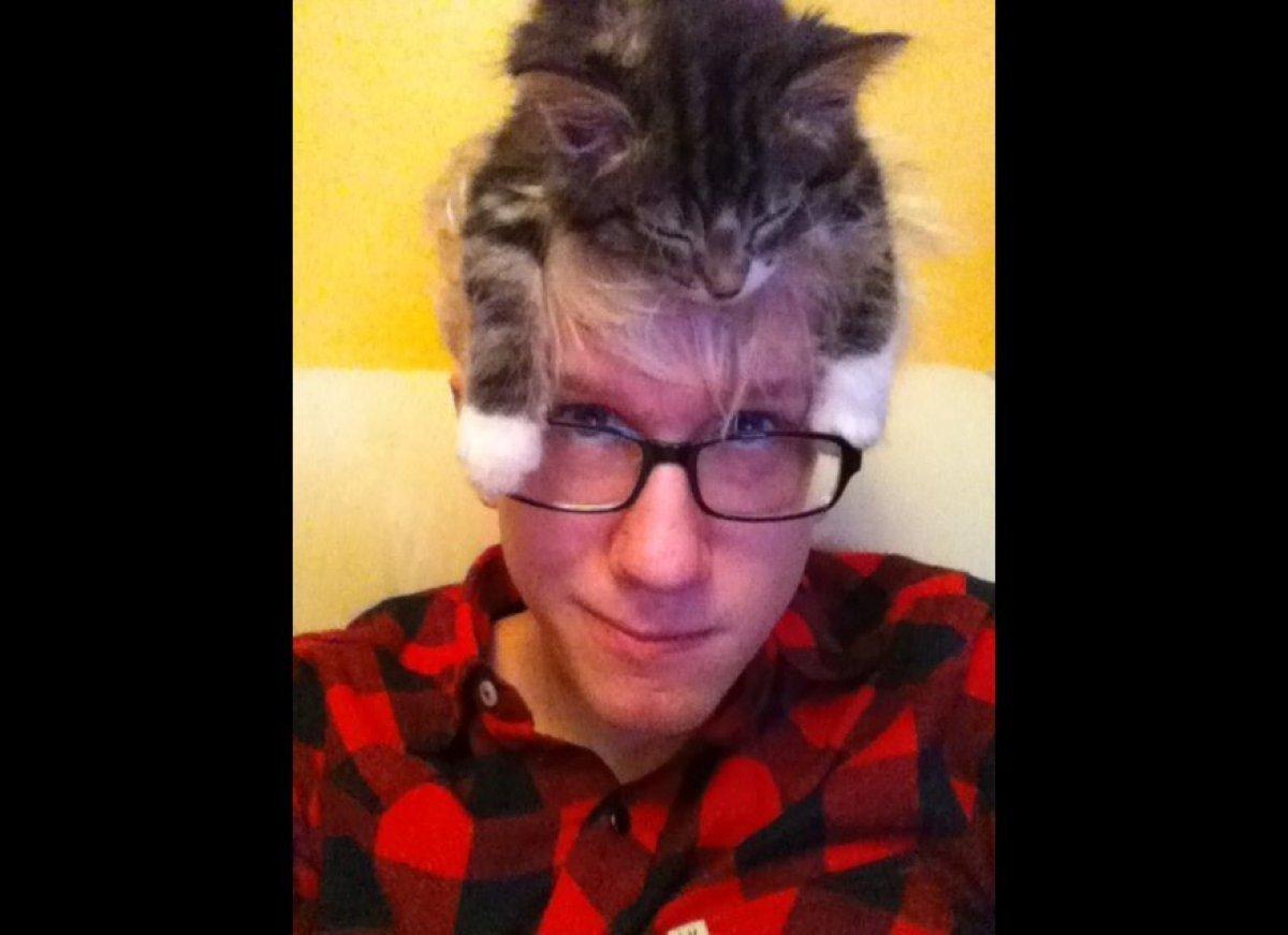 Quick cat nap hat.