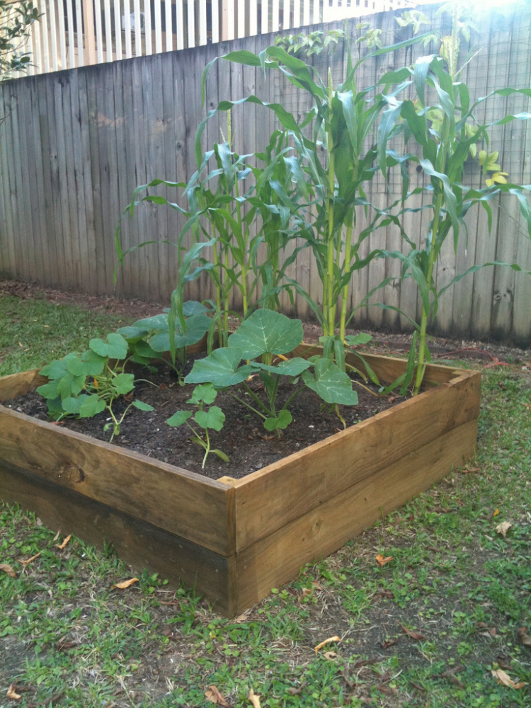 Gardening gets easy in a raised bed, which creates the perfect conditions for growing your favorite plants, flowers and veggi