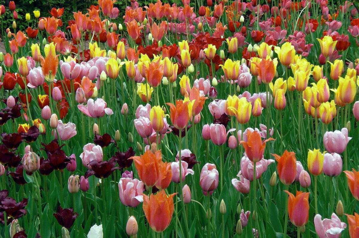 Created for Germany's horticultural show in 1985, this garden features a large collection of vibrant flowers, including daffo