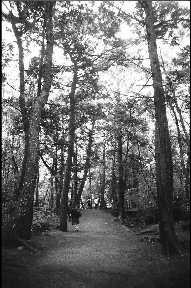 Entering Aokigahara.