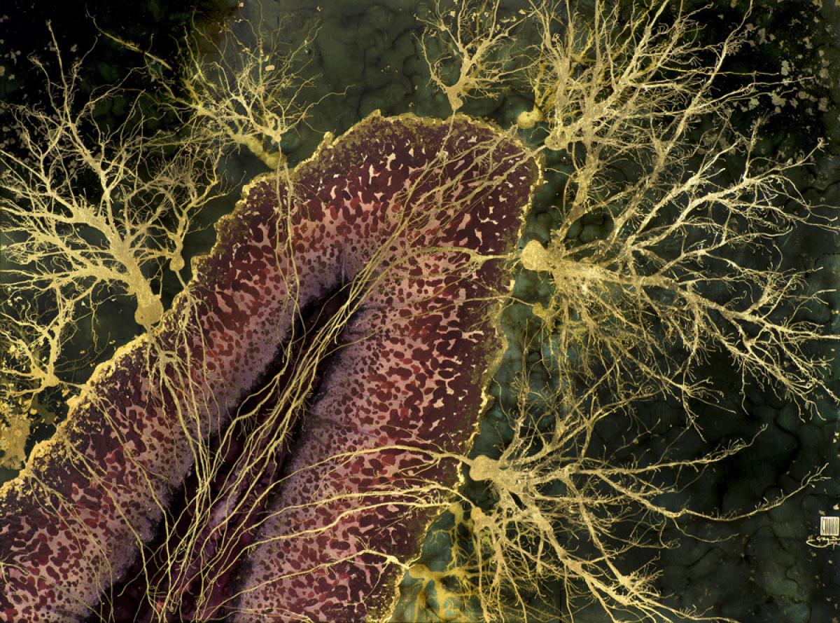 "Greg Dunn, ""Cerebellar Lobe."" 22K gold, dye, and enamel on aluminized panel. 48"" X 36"" 2012. Depicts the cerebellum, a re"