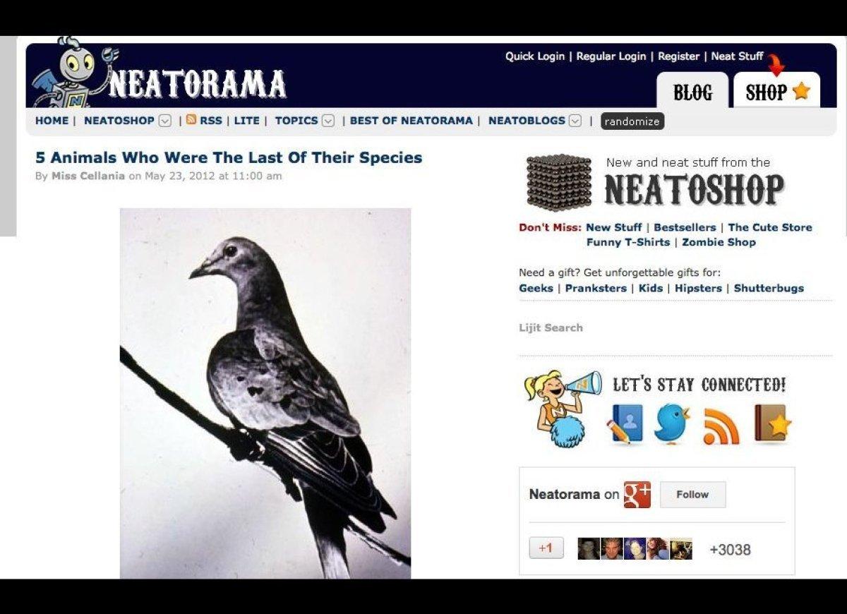 "Dope art, fun facts and weird stories -- <a href=""http://www.neatorama.com/"" target=""_hplink"">Neatorama</a> has pretty much e"