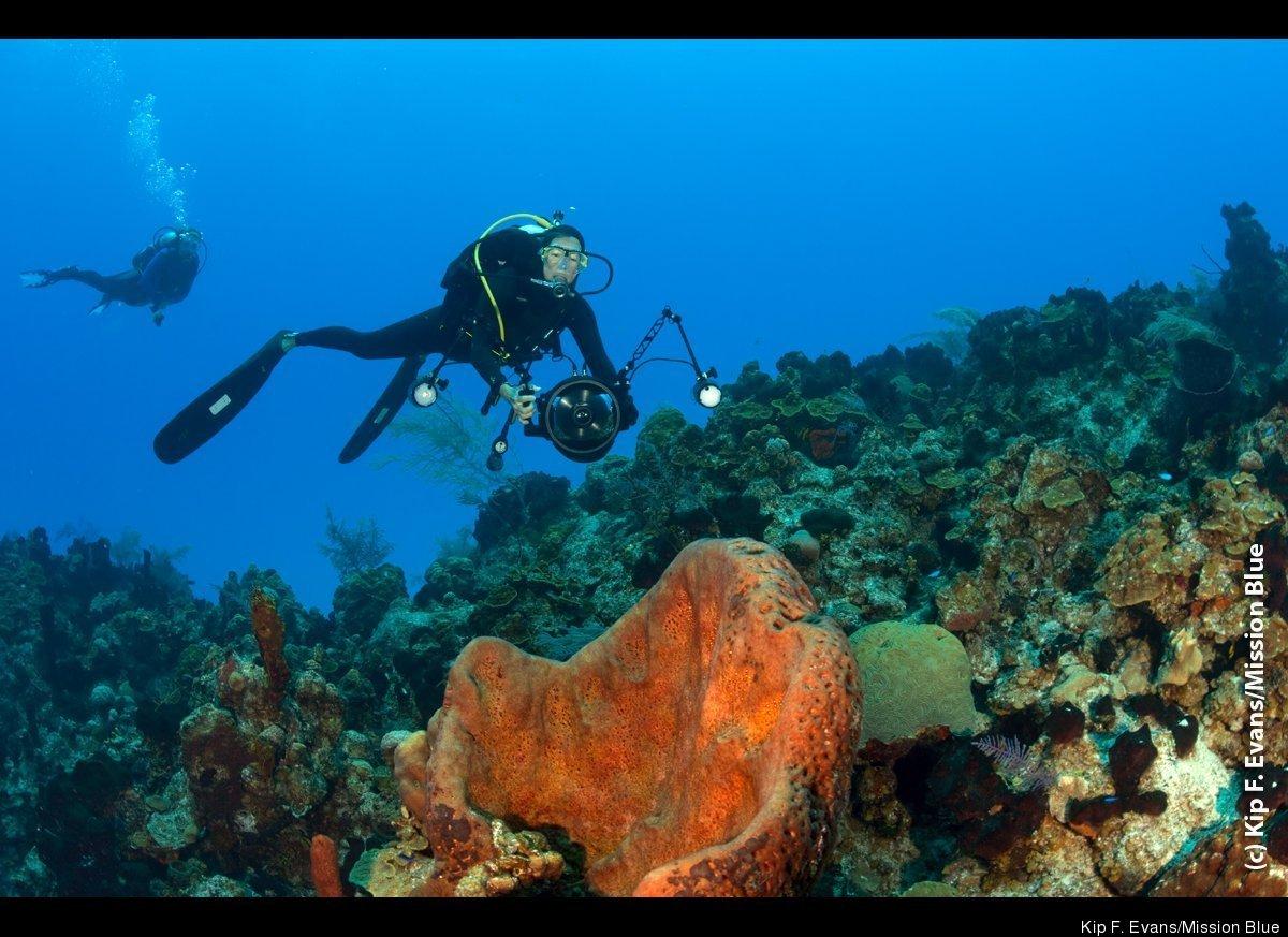 Chris Guinness Diving