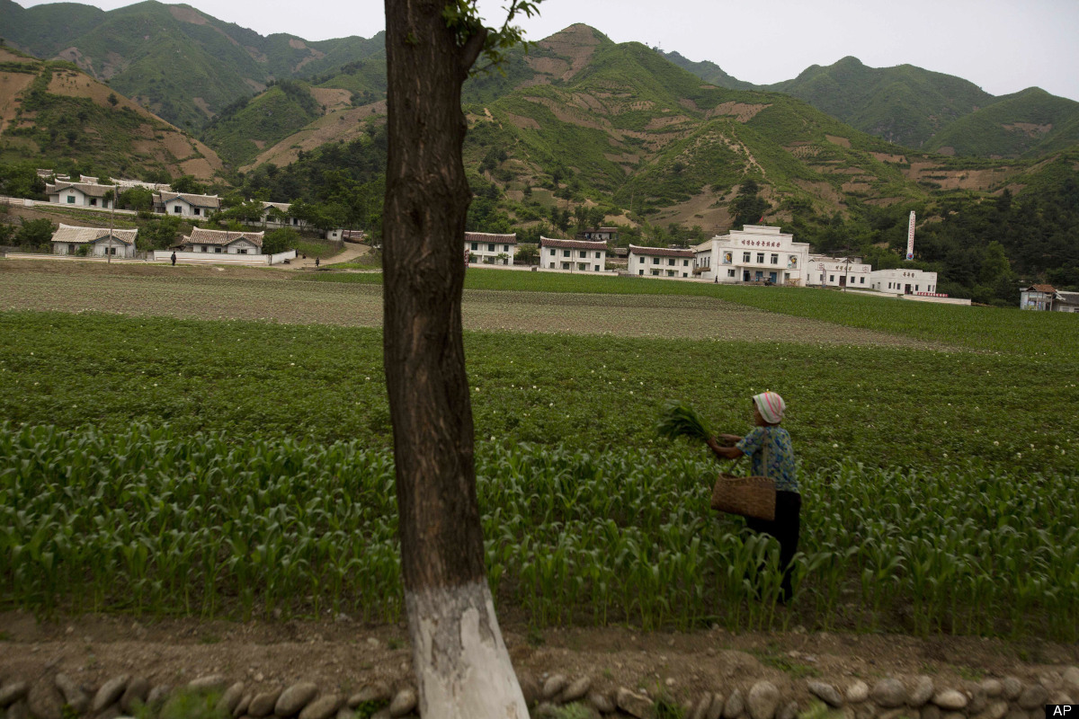 A North Korean woman works in a field in North Phyongan Province, North Korea on Thursday, June 14, 2012. (AP Photo/David Gut