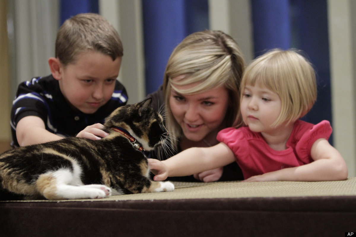 In this Thursday, Sept. 22 2011 photo taken in New York, Willow, a 6-year calico cat that went missing from her Colorado home